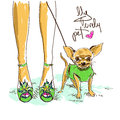 Legs of fashion girl and little chihuahua illustration with in shoes cute Stock Images
