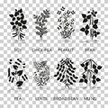 Legumes plants with leaves, pods and flowers. Silhouette icons with reflection on transparent background