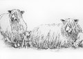 Leicester long wool sheep illustration Royalty Free Stock Photo