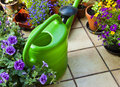 Leisure time gardening on the terrace summer with beautiful flowers and a watering can Royalty Free Stock Photography