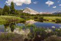 Lembert dome from tuolumne meadows view of majestic with water reflection Royalty Free Stock Photography