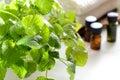 Lemon balm for aromatherapy treatment Royalty Free Stock Photo