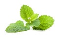 Lemon balm close up of fresh organic on white background shallow dof Stock Photo