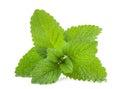 Lemon balm Royalty Free Stock Photo