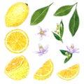 Lemon clipart set. Hand drawn watercolor illustration