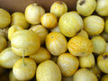 Lemon cucumber cucumis sativus lemon cultivar with small nearly globose yellow fruits with tubercle remnants and pale Royalty Free Stock Photos