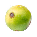 Lemon diseases citrus canker on fruit isolated on white background with clipping path Stock Photos