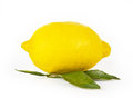 Lemon fruit on white background Royalty Free Stock Photos