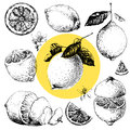 Lemon hand drawn illustrations of beautiful yellow fruits Stock Photos