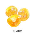 Lemon illustration. Hand drawn watercolor on white background.