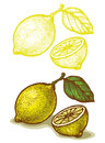 Lemon illustrations of in retro style Royalty Free Stock Images