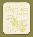Lemon label fresh organic vector illustration retro fruitl design vector old paper texture background Stock Photo