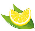 Lemon and leaves vector illustration Stock Photography