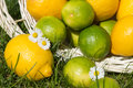 Lemon and lime in a basket on a meadow Stock Photo