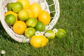 Lemon and lime in a basket on a meadow Royalty Free Stock Photo