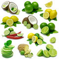 Lemon and Lime Combos Stock Image