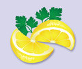 Lemon and parsley garnish vector illustration of two wedges of with italian Stock Photos