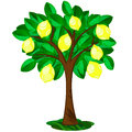 Lemon tree icon of single with ornate fruits Royalty Free Stock Photography
