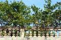 Lemon Trees Royalty Free Stock Photo