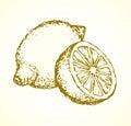 Lemon. Vector drawing