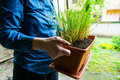 Lemongrass in flowerpot woman holding a with Royalty Free Stock Image