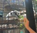 Lemurs Royalty Free Stock Photo
