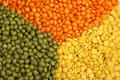 Lentils and green mung beans Stock Images