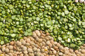 Lentils and Peas Royalty Free Stock Images