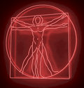 Leonardo da vinci s vitruvian man in a red neon tube homo quadratus d rendering on black background reflecting glossy Stock Image