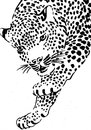 Leopard abstract face nature animals Stock Image