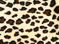 Leopard background Royalty Free Stock Photography