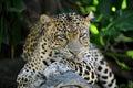 Leopard a close up shot of an african Stock Photos