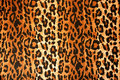 Leopard cloth Royalty Free Stock Photo
