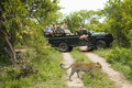 Leopard crossing road with tourists in background panthera pardus jeep Royalty Free Stock Photography