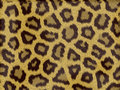 Leopard fur Stock Photo