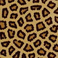 Leopard fur Royalty Free Stock Photography