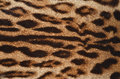 Leopard fur closeup of texture Royalty Free Stock Image