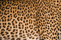 Leopard fur pattern Stock Images