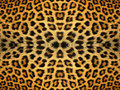 Leopard Fur Pattern Royalty Free Stock Photo