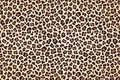 Leopard fur print, horizontal texture with dark borders. Vector Royalty Free Stock Photo