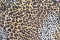 Leopard fur skin texture Royalty Free Stock Photo