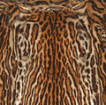 Leopard fur texture background Royalty Free Stock Photo