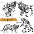 Leopard sketch. Wild animal illustration. Royalty Free Stock Photo