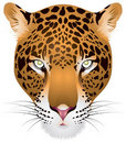 Leopard head in  Royalty Free Stock Images