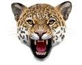 Leopard Head. Illustration.