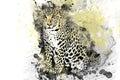 Leopard, Jaguar, predator painted colors