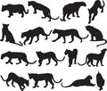Leopard or panther silhouette contour