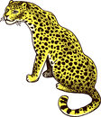 Leopard panther wild cat vector illustration Stock Photo