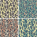 Leopard Pattern_Camouflage Stock Photos