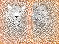 Leopard pattern with head illustration background camouflage and two heads Royalty Free Stock Photography